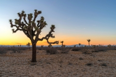 Saddleback State Park is located near Lancaster in the Mojave desert. Joshua trees are common throughout the park. It offers a number of trails for easy hikes.